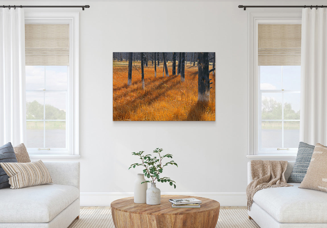 Gilded Forest in Home