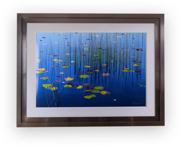 Framed photograph of water lilies and reeds in bright blue water in a silver frame with white linen liner