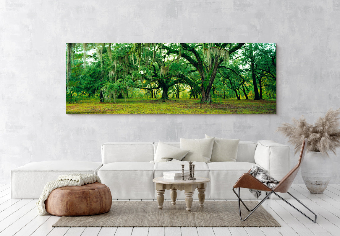 Mystical Forest in Home
