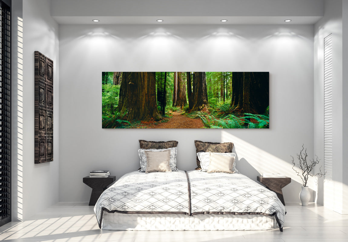 Redwood Forest in Home