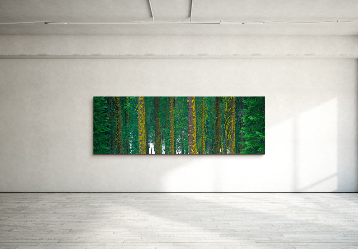 Silent Forest in Home