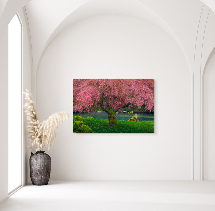 Tree of Dreams in Home
