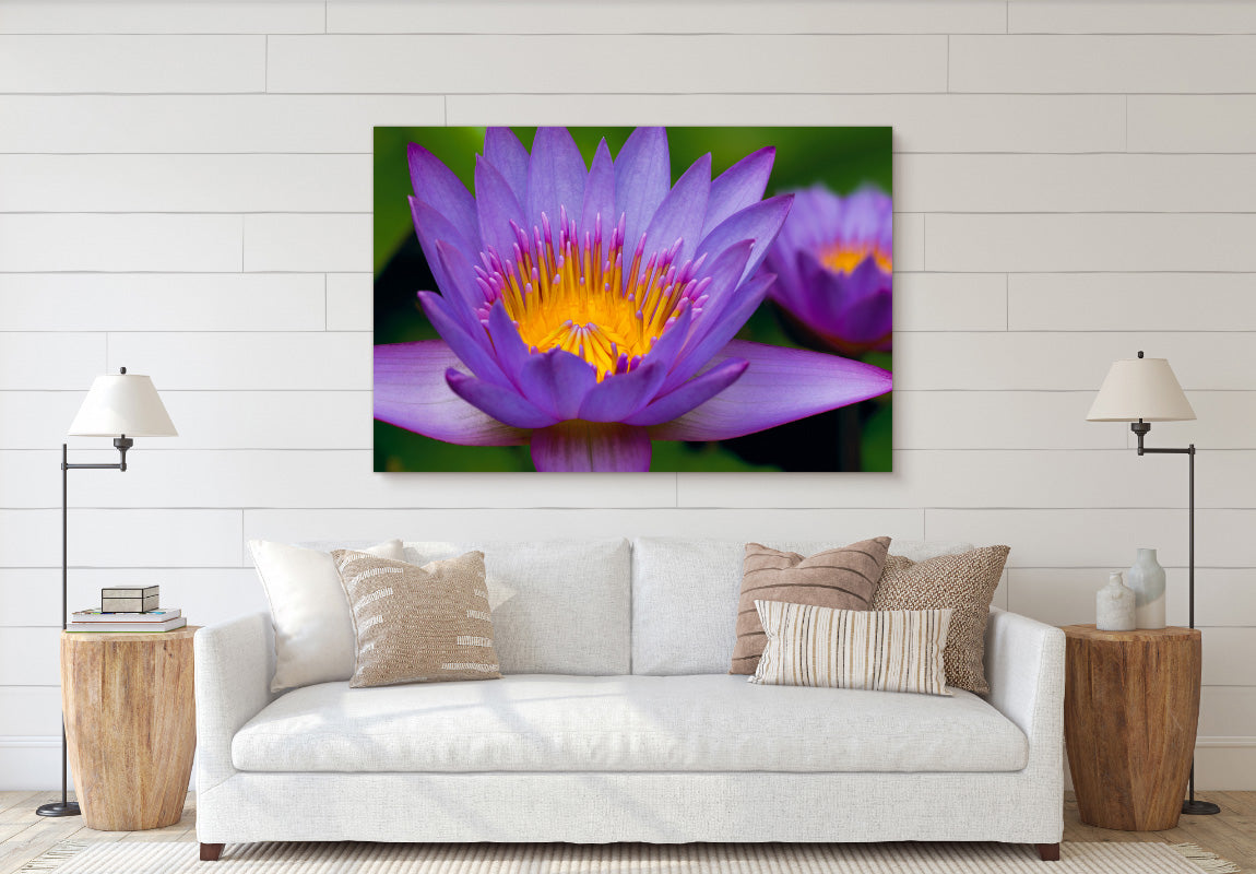 Waking Lotus in Home