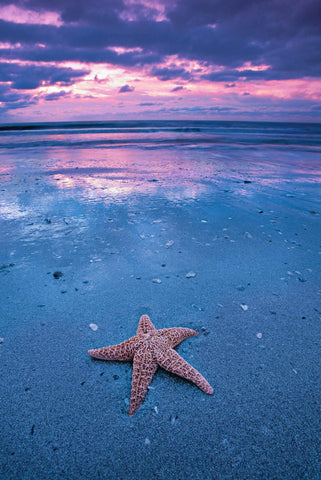 Star fish sitting on the wet sand beach of Edisto Island South Carolina during a cloudy sunset