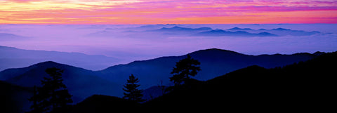 View looking down over the fog covered Great Smoky Mountains of Tennessee at sunrise