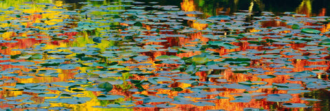 Pond full of lily pads with Autumn colors reflecting on the water