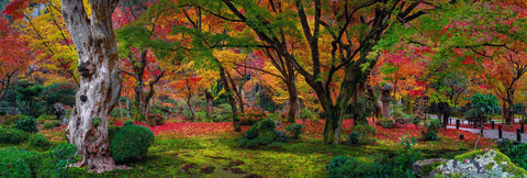 Autumn colored trees and red leaves covering the mossy floor in a garden in Kyoto Japan
