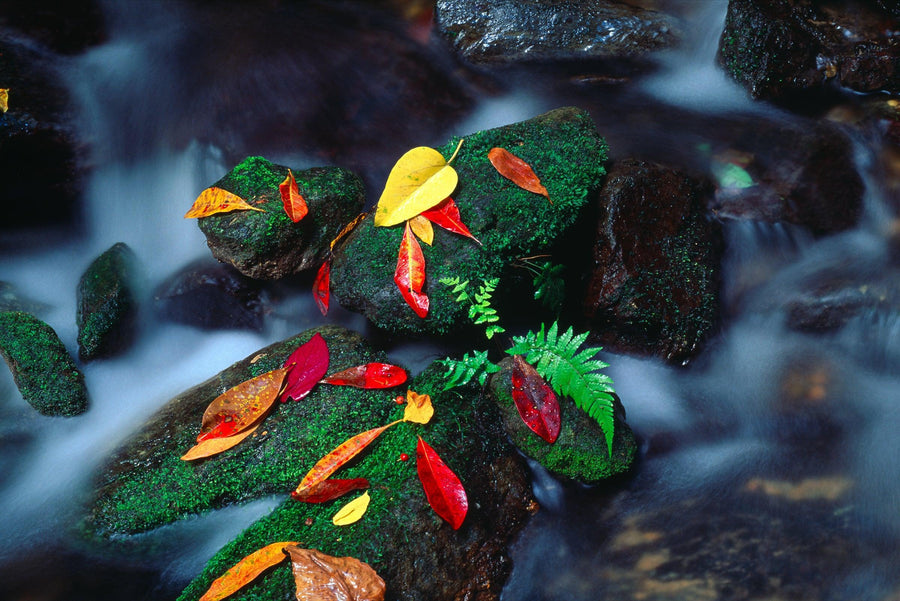 Up close view of mossy rocks covered with autumn leaves in a river in the Daintree National Park Australia