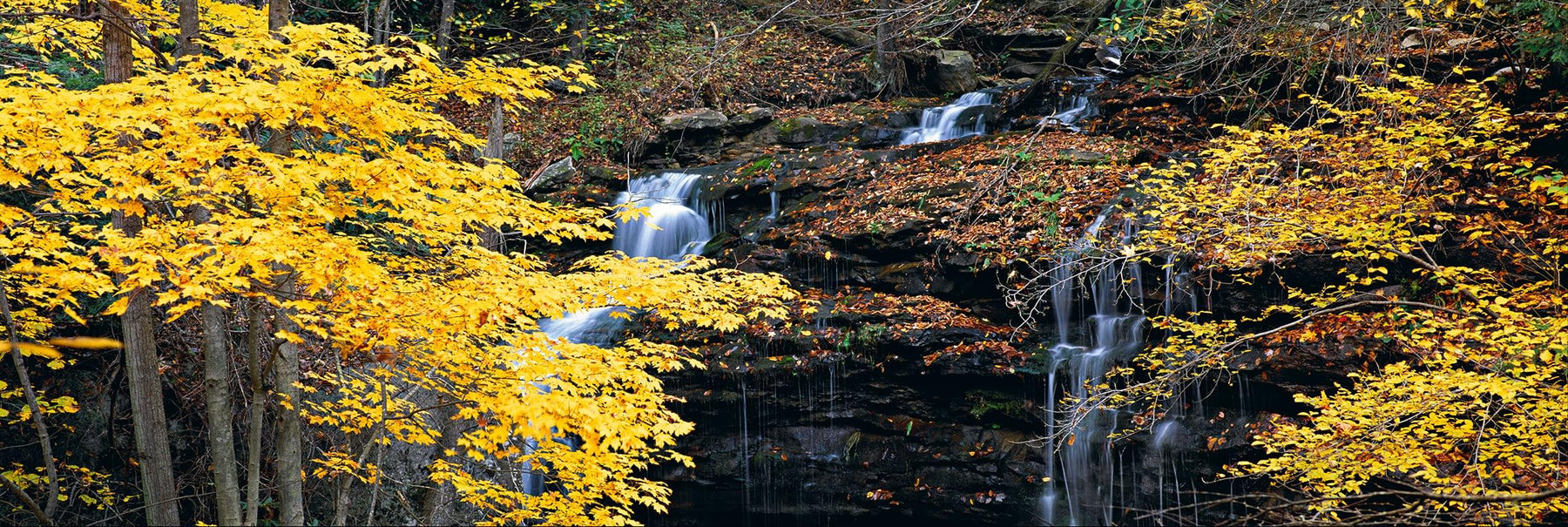 Yellow leaf trees in front of an Autumn leaf covered waterfall pouring into Glade Creek West Virginia