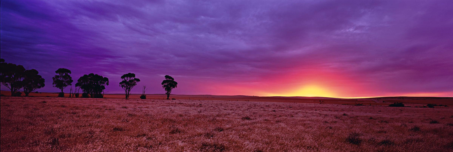 Tree and brush filled prairie of Burra Australia being lit up by the sun as it pierces the horizon