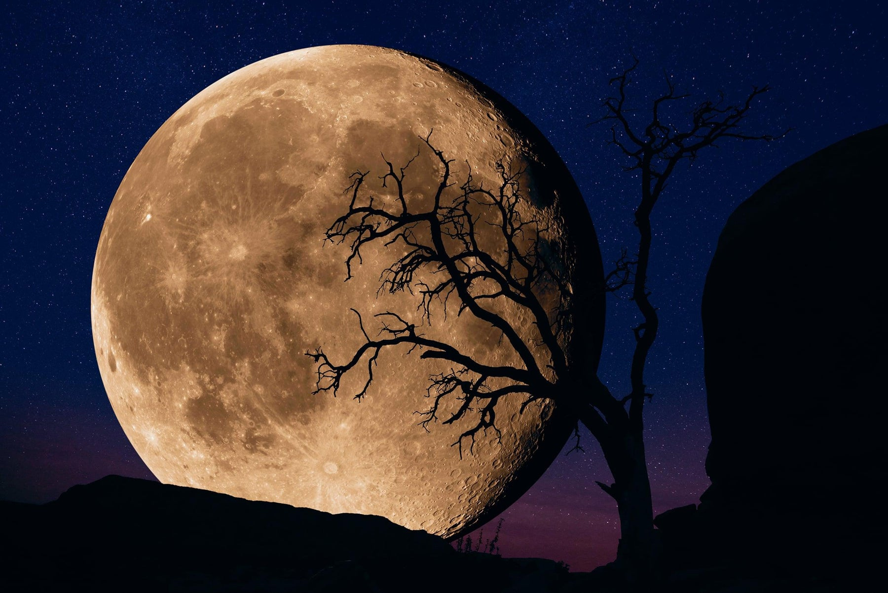 Silhouette of a tree and mountainside in front of the full moon at night in Kodachrome basin State Park Utah