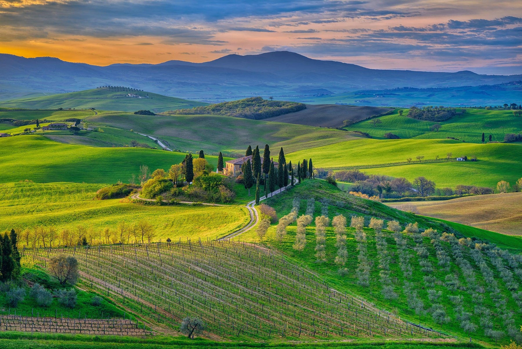 View from a hillside looking over old stone homes surrounded by cypress trees vineyards and green fields in Tuscany Italy