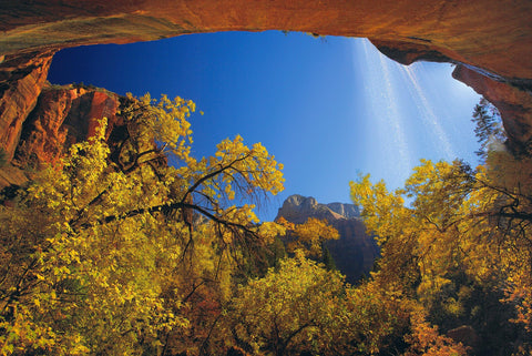 Looking up trough the Autumn forest at Cathedral Falls pouring over a rock wall in Zion National Park Utah