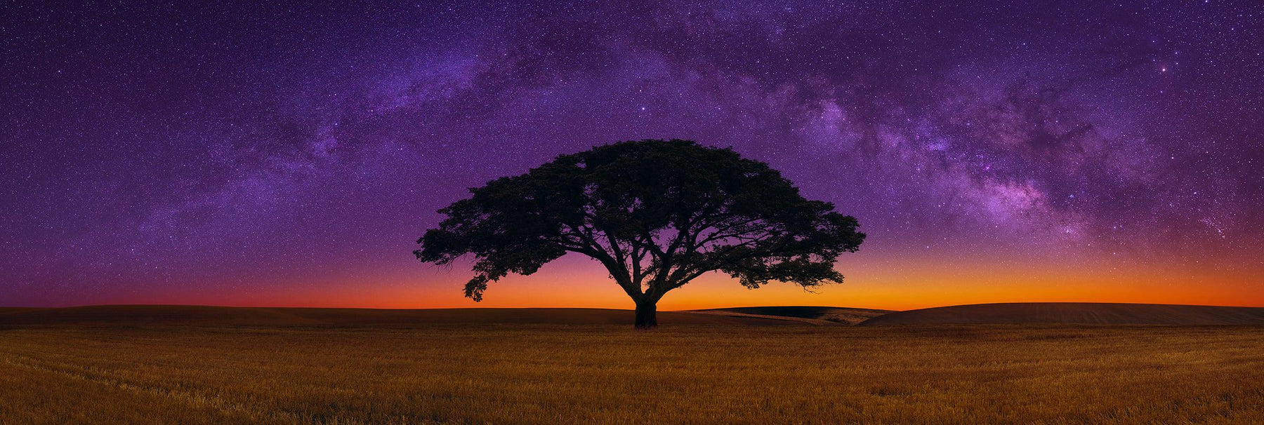 Silhouette of a single tree in a field with the horizon glowing below a star lit skies