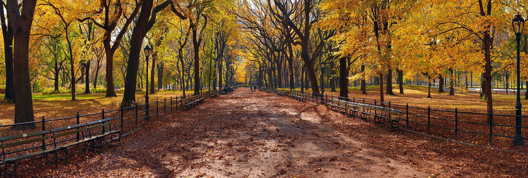 Yellow leaf trees along the iron rod fences and bench filled path of Central Park New York