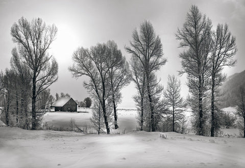 Black and white snow covered cabin surrounded by trees in Jackson Hole Wyoming