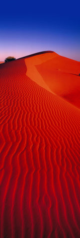 Red windswept sand dune in the Simpson Desert Australia below a purple and blue sky