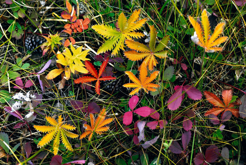 Colorful leaves grass and plants on the forest floor in Colorado