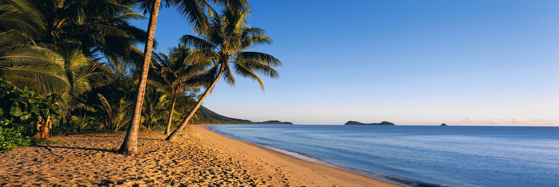 Palm tree lined beach on the coast of Queensland Australia
