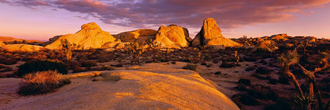 Giant stone formations Joshua trees and desert foliage of Joshua Tree National Park at sunset