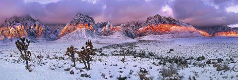 Snow covered Joshua trees desert floor and mountains of Red Rock Canyon Nevada