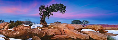 A lone tree growing out of snow covered boulders on the cliffs of Canyonlands National Park Utah