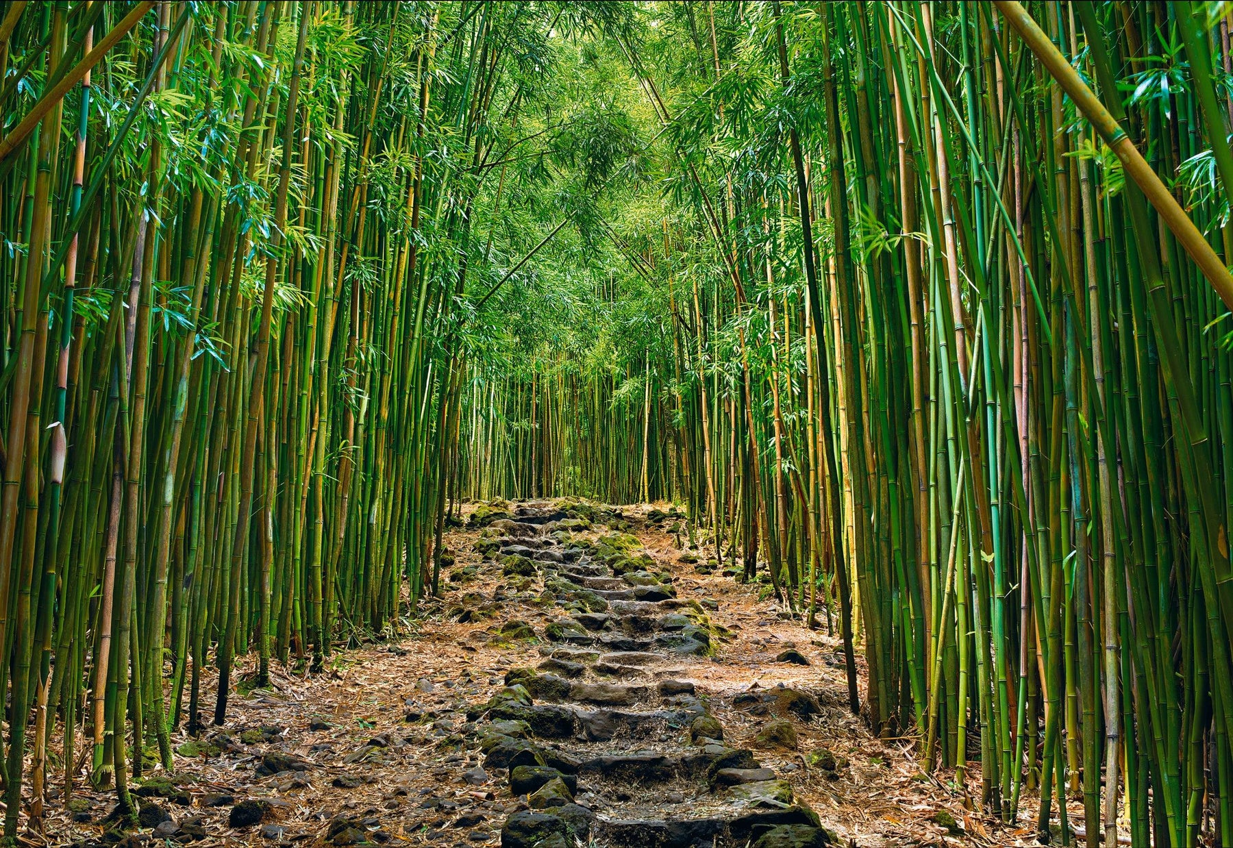 Rock pathway leading through a green bamboo forest in Hana Maui