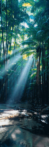 Sun shining through the canopy of palm trees onto the sandy rainforest in Fraser Island Australia