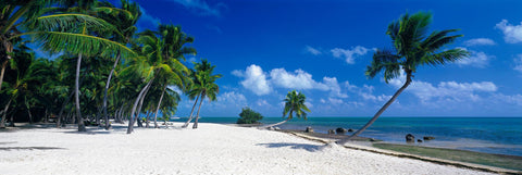 Palm trees on a white sand beach in Islamorada Florida