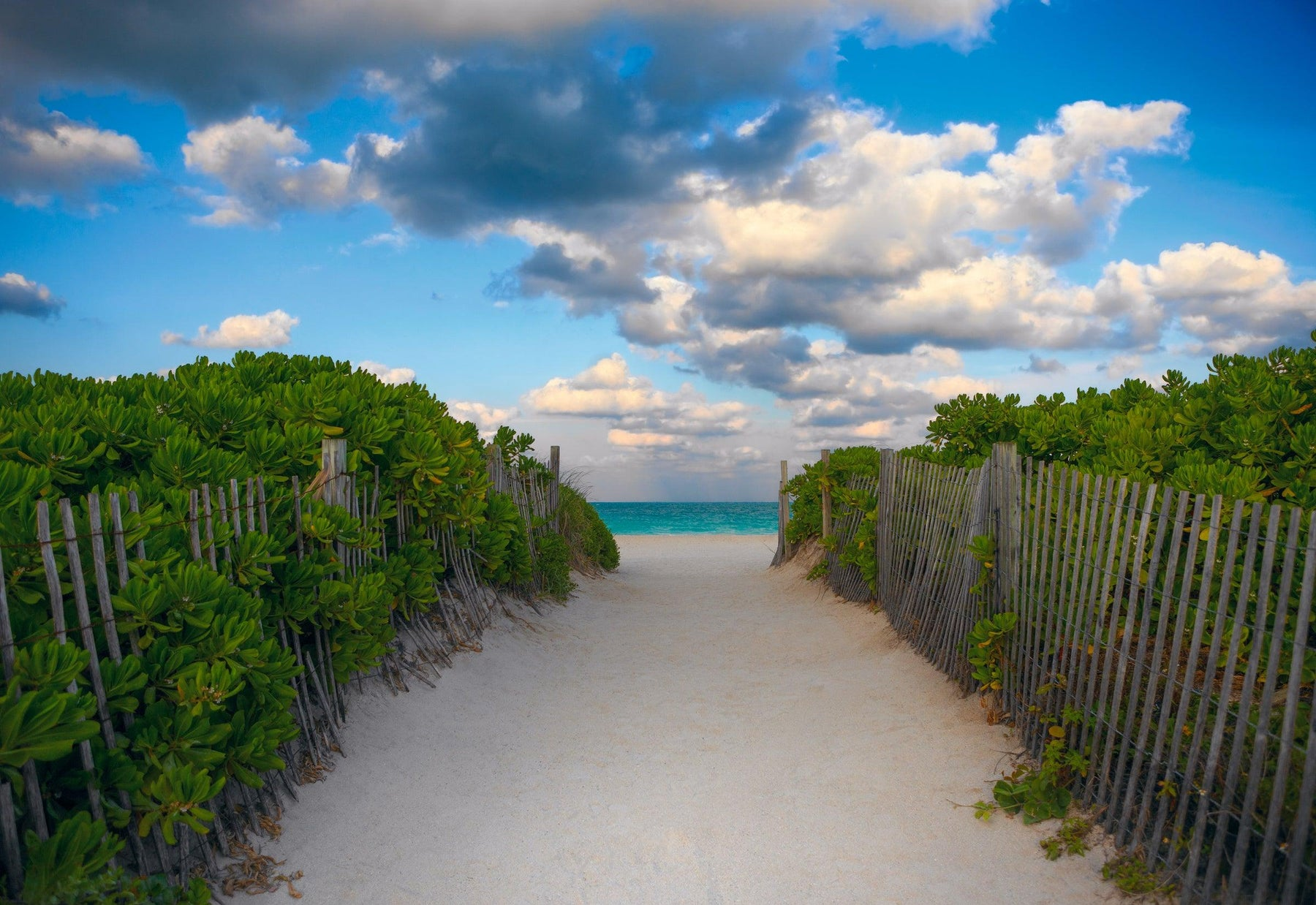 Sand pathway with picket fences and green foliage leading to a beach in Miami Beach Florida