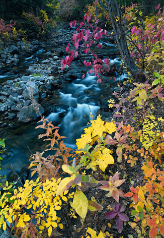 Water running down a shallow creek surrounded by colorful leaves and plants in a forest in Colorado