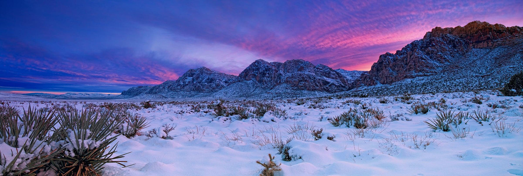 Snow covered yucca plants desert floor and mountains of Red Rock Canyon Nevada
