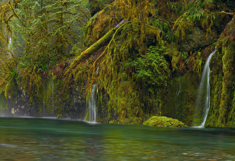 Water pouring through foliage and down a moss covered rock wall into the Columbia River Gorge Oregon