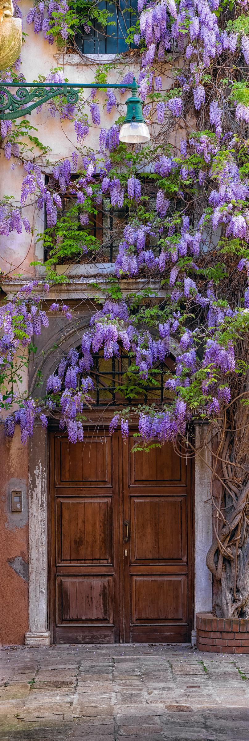 Purple flowers of the creeping Wisteria hanging over the doorway of an old building in Venice Italy