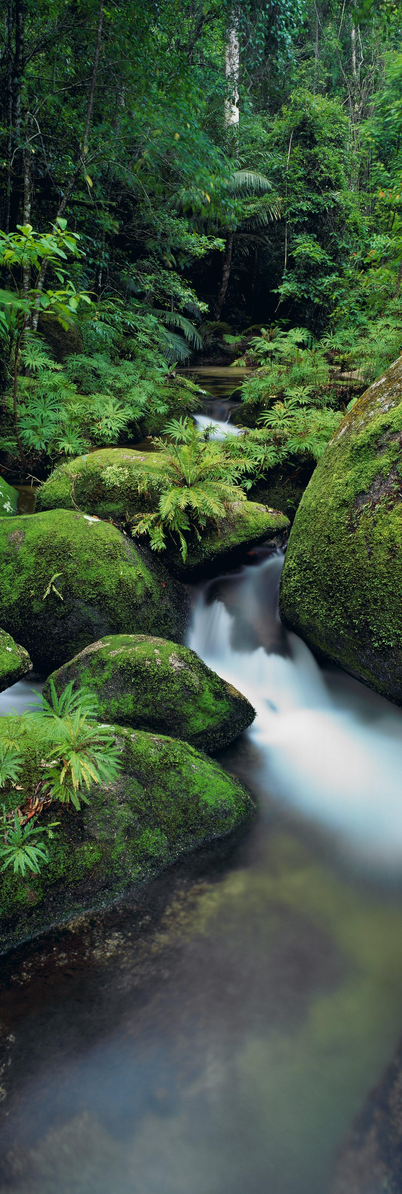 Creek running through mossy boulders in the rainforest of Daintree National Park Australia