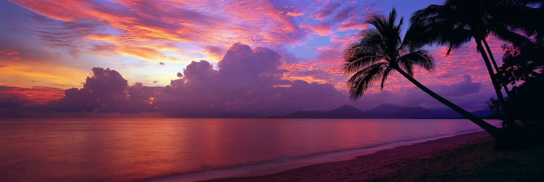 Cloudy pink and purple sunrise with palm trees leaning over the sand beach at Holloways Australia