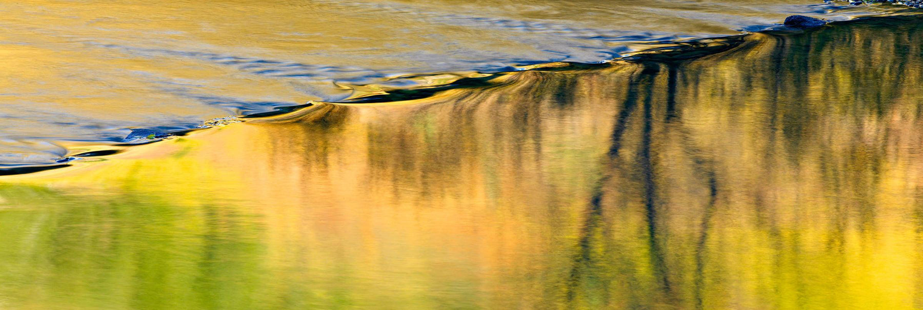 Close up of a calm river rolling over rocks reflecting the yellow Autumn colors of the Colorado forest