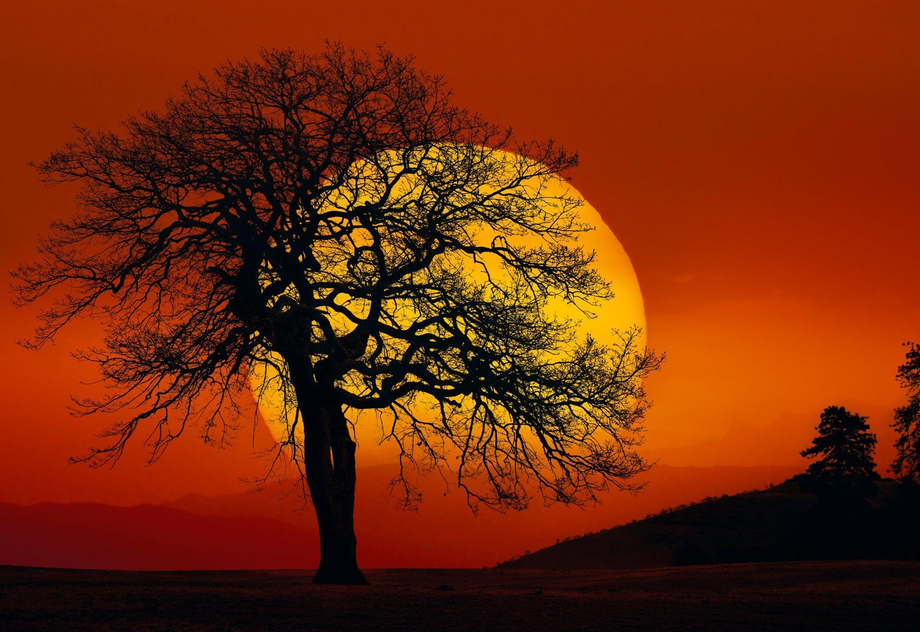 Giant yellow sun rising into a red sky behind the silhouette of a tree and hillside in Centerville Washington