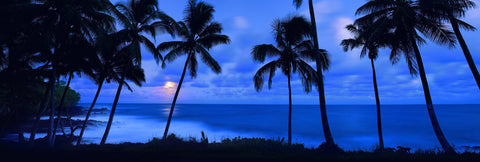 Palm tree silhouettes on a beach in Kapoho Hawaii with the moon glowing through the clouds in the distance