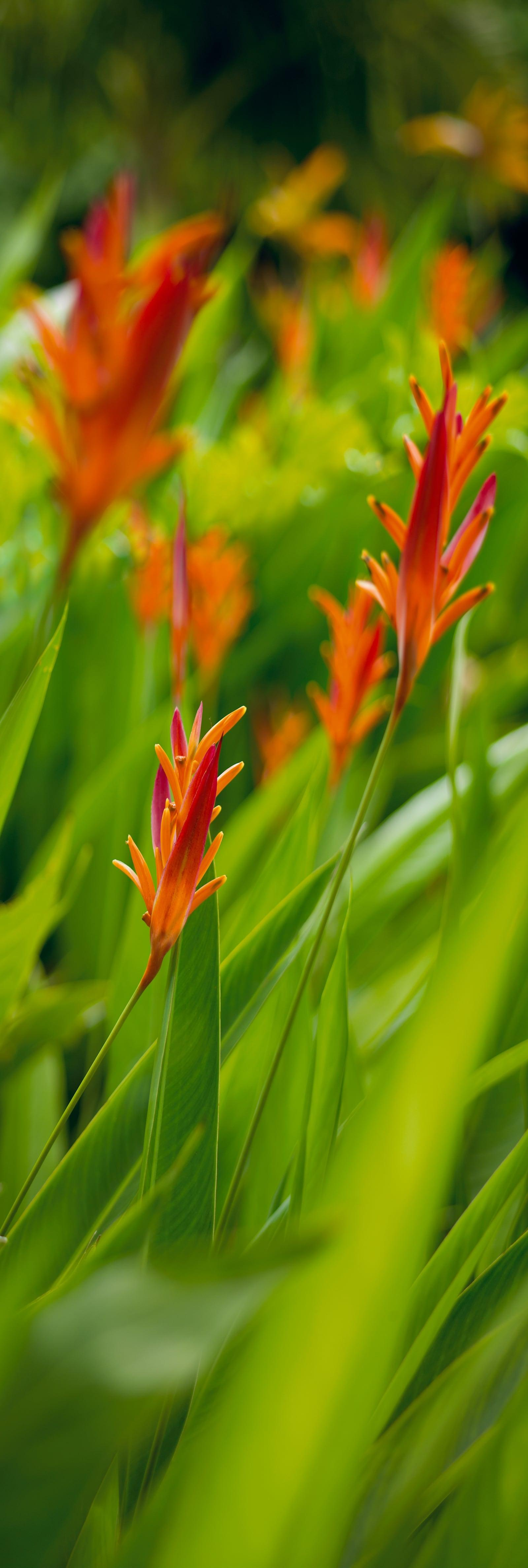 Close up of tropical foliage filled with orange flowers blowing in Hana Hawaii
