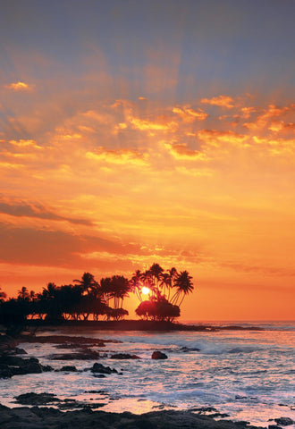Sun setting behind palm tree silhouettes in the distance off the shore of Kona Hawaii