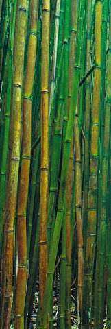 Bamboo Forest by Peter Lik. No frame.