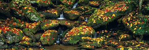 Autumn colored leaves covering mossy rocks at the base of a stream in Great Smoky Mountains National Park Tennessee