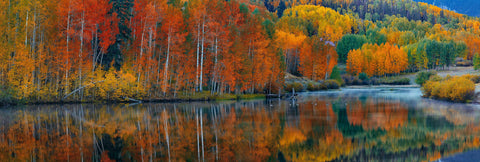 Autumn colored forest reflecting off a misty lake in Telluride Colorado