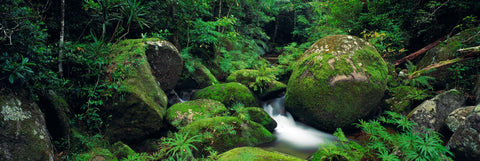 Giant moss covered boulders along a stream in the tropical rainforest of Mount Lewis, Australia