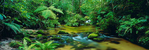 Green river flowing through the rainforest of Mount Lewis National Park