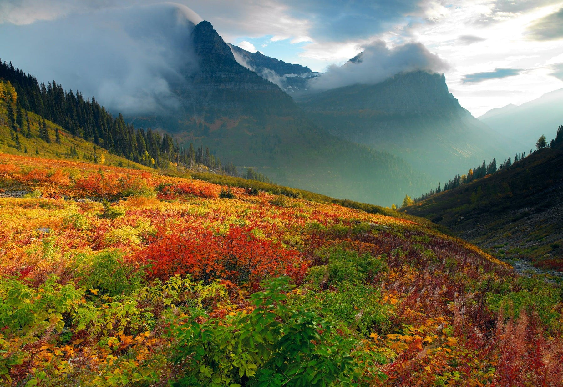 Sun shining on a colorful hill of plants with cloud covered mountains in back at Glacier National Park Montana