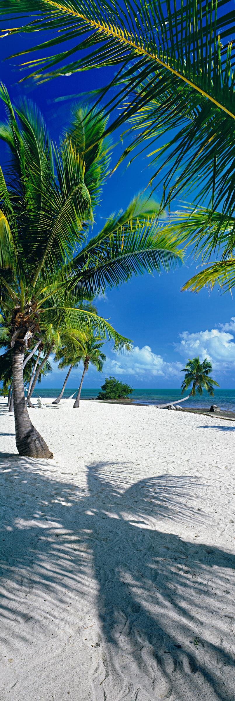 Palm trees swaying on the white sand beaches of Islamorada Florida