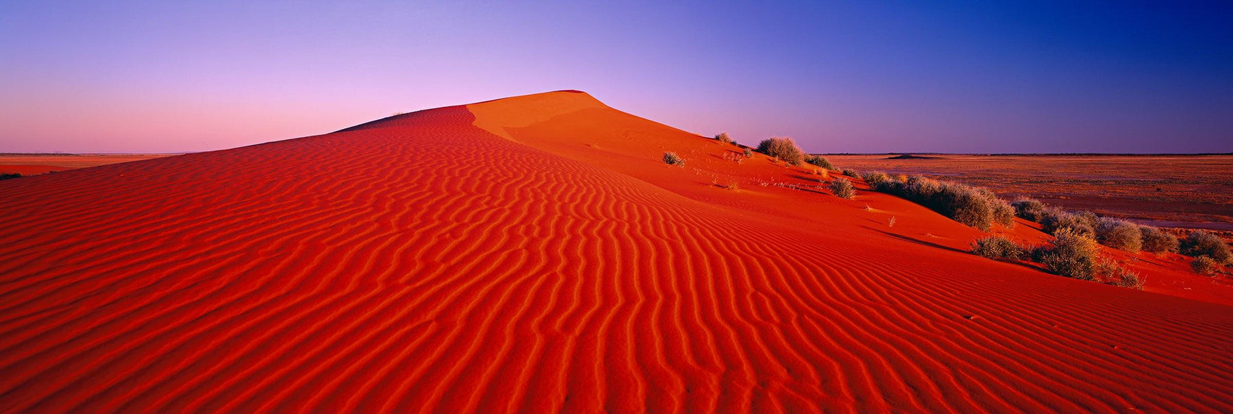 Orange sand dune in the Desert of Northern Territory Australia under a pink and purple sky