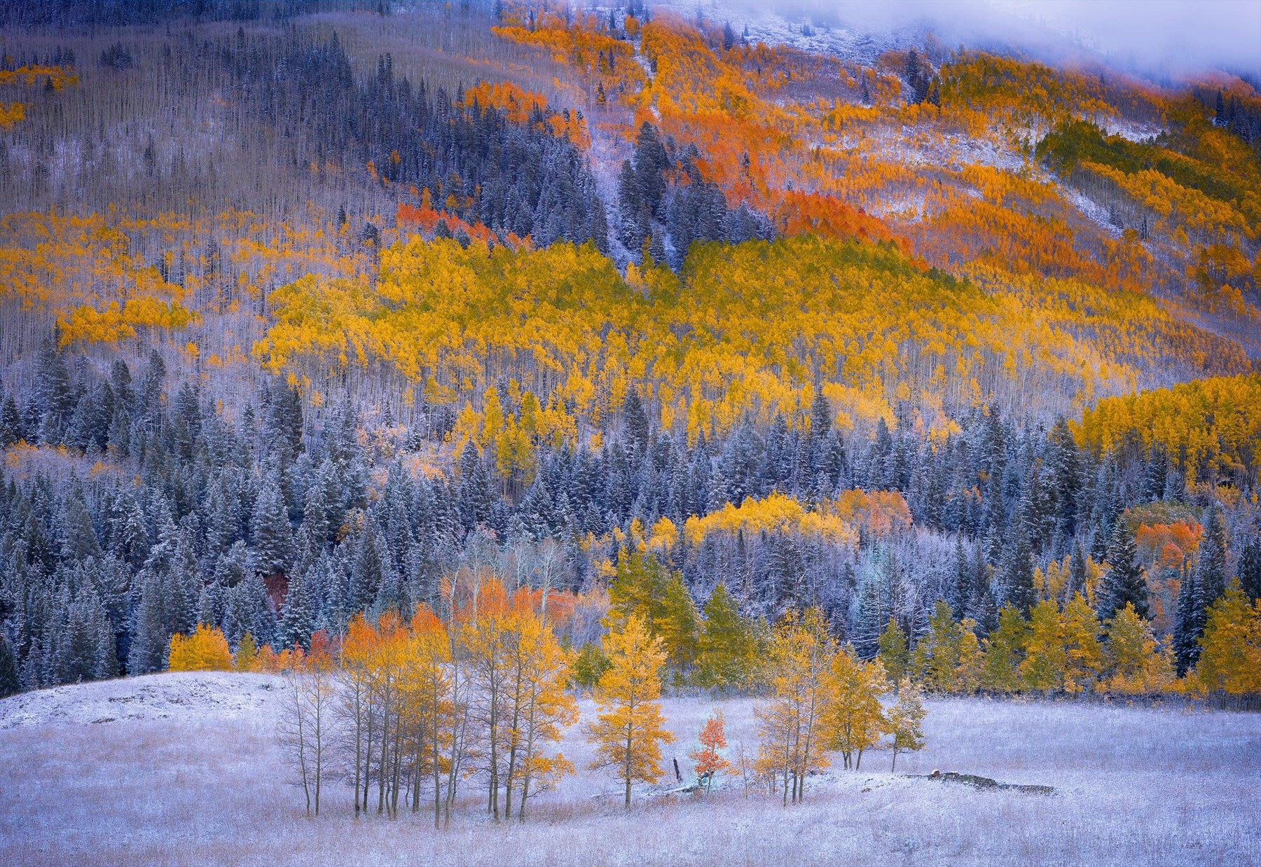 Snow covered field in front of a Autumn colored mountainside in Aspen Colorado